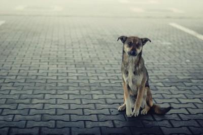 悲しそうな表情で道に座る犬