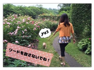 #犬と散歩している写真#
