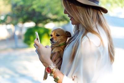 携帯をチェックする犬と飼い主