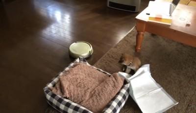 子犬がカーペットの上に座り込んでる