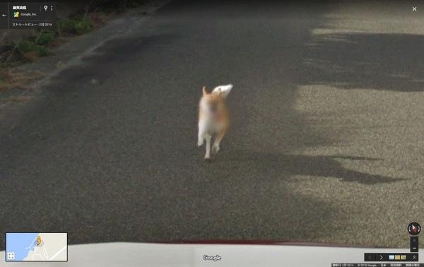 ストリートビューに写り込んだ犬がモザイクを掛けられる