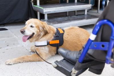 車椅子の人に寄り添う介助犬