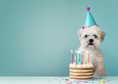 帽子をかぶった犬とケーキ