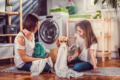 洗濯物で遊んでいる犬と家族