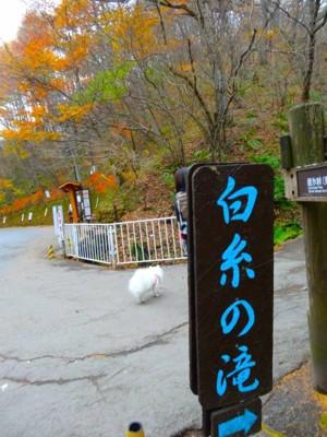 白糸の滝の案内標識
