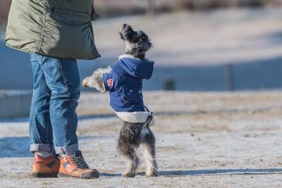 飼い主に立ってアピールする犬