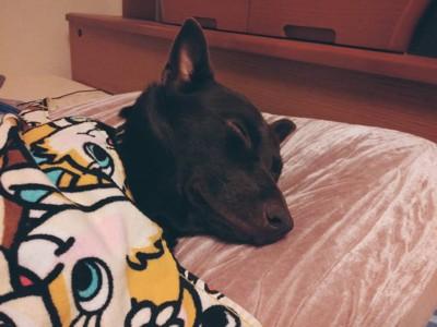 気持ち良さそうな顔で寝る犬