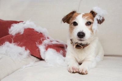 クッションの中綿を出した犬