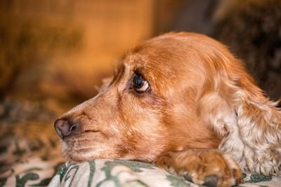 困った顔をしている犬