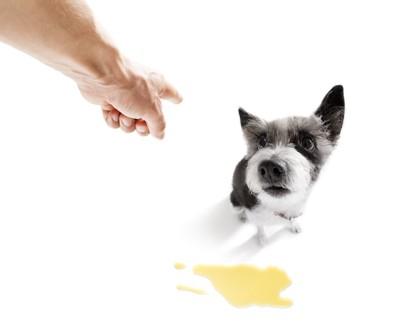 粗相をした犬を叱る人の手
