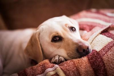 ケージ越しで悲しそうな様子をしている犬