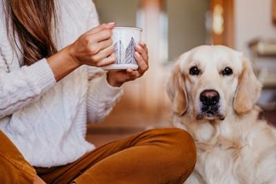 カップを持つ人と犬