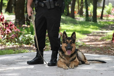 警察と警察犬