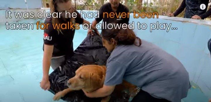 ハイドロセラピーを行う犬