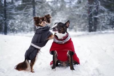 雪の中で冬服を着た2頭の犬
