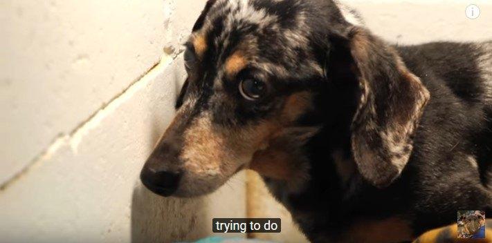 壁際に逃げた犬