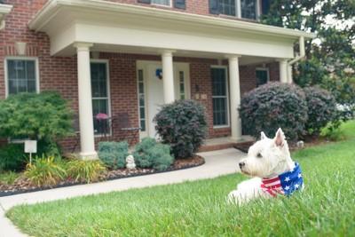 家の庭でくつろぐ白い犬