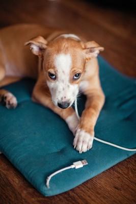 USBケーブルを噛みちぎってしまった犬