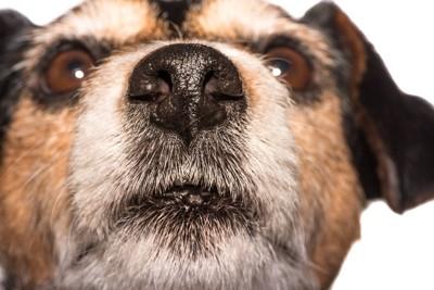犬の鼻先アップ