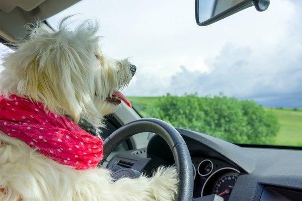 ハンドルに手を置いている犬