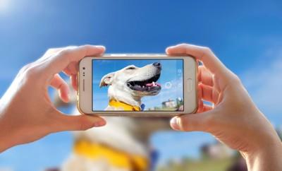 スマートフォンで青空と犬の横顔を撮っている人の手