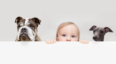 子供と2匹の犬