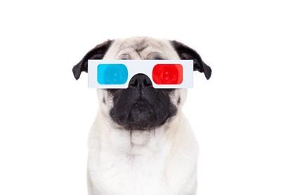 3Dサングラスをかけるパグ