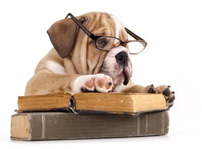 本で調べている犬