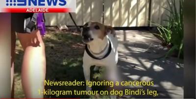 ニュース画像の犬