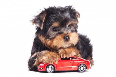 犬と車のおもちゃ