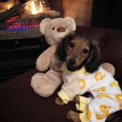 ダックス あひるのパジャマ