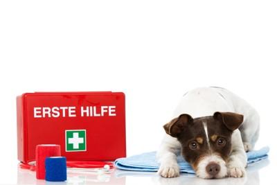 犬と救急箱
