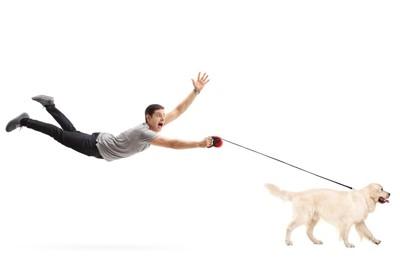 強い力でリードを引っ張って飼い主を引きずっている犬