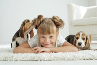二匹のビーグル犬と女の子