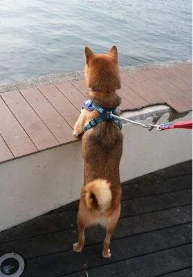 海を見つめる犬