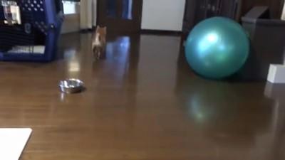 扉に走ってる犬