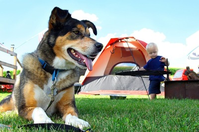 犬と後方に男児とテント