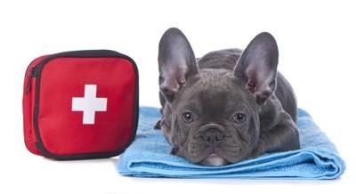 救急箱と犬