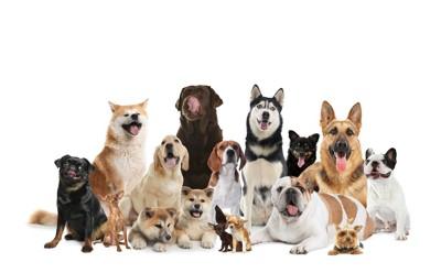 たくさんの大きさや種類の違う犬たち