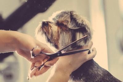 すきハサミでカットされている犬