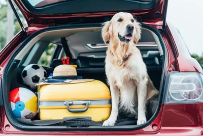 車に乗る犬とスーツケース