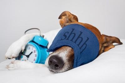 時計とアイマスクを付けて寝ている犬