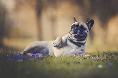 花畑で横になる犬