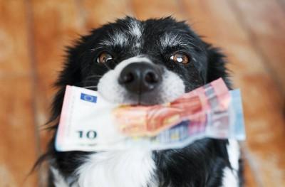 お金を咥えてこちらを見上げる犬