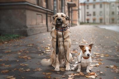 犬を散歩させる犬