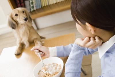 テーブルに手を置いて食事をする女性を見つめるダックスフンド