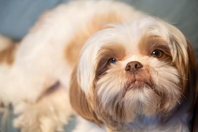 無表情な犬