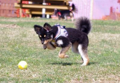 #ボールを追いかける犬#