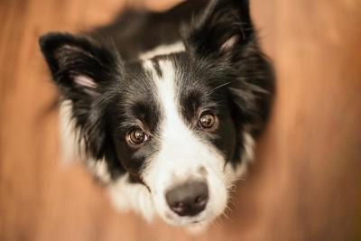こちらを真っすぐに見上げる犬