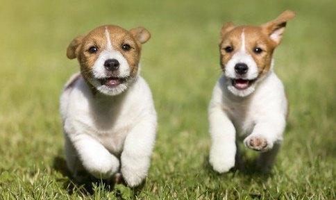 走る2頭の子犬